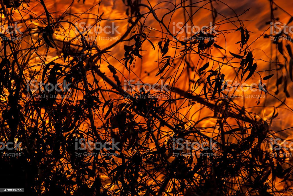 Wild Fire and Leaves royalty-free stock photo