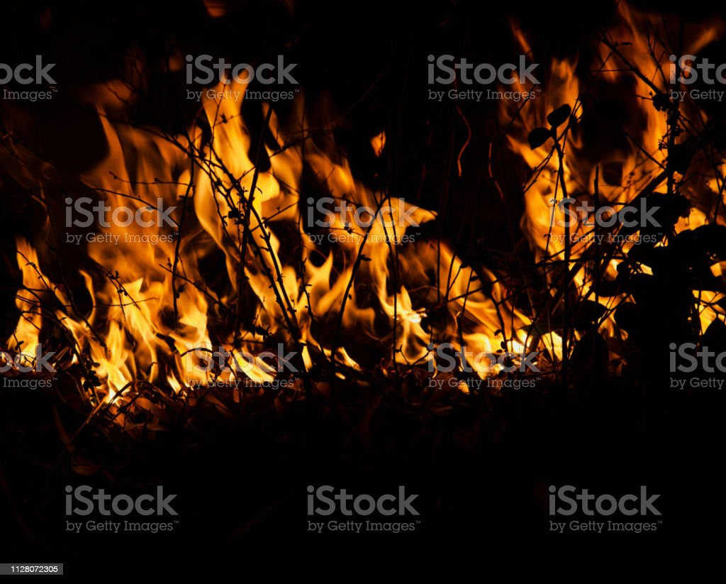Wild fire flames around a forest at night stock photo