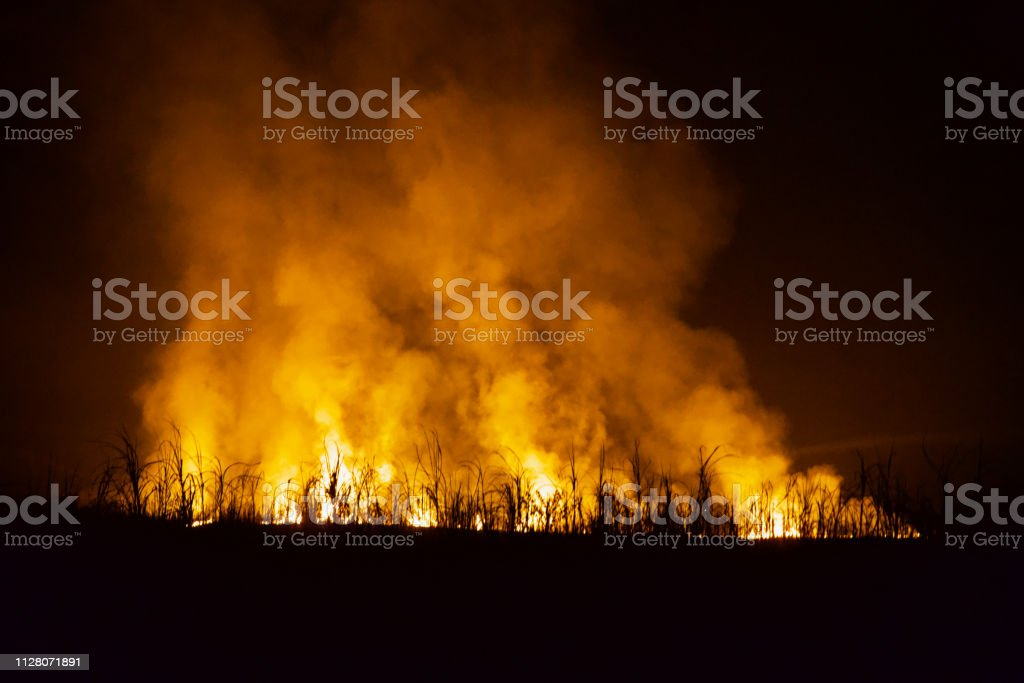Wild fire flames with smoke around a forest area stock photo