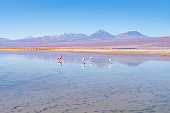 San Pedro de Atacama, Antofagasta Region, Chile