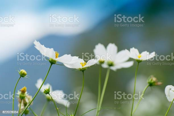 Photo of Wild flower at Borong Village in Borong, Sikkim , India.