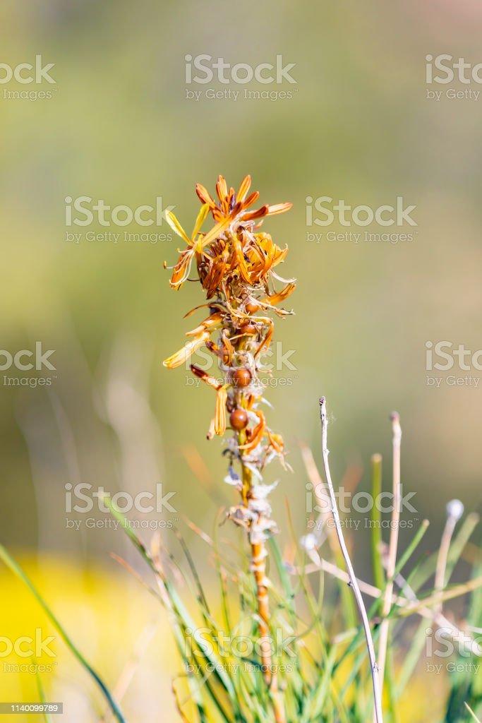 Ürdün 'de dağ vahşi çiçek stok fotoğrafı
