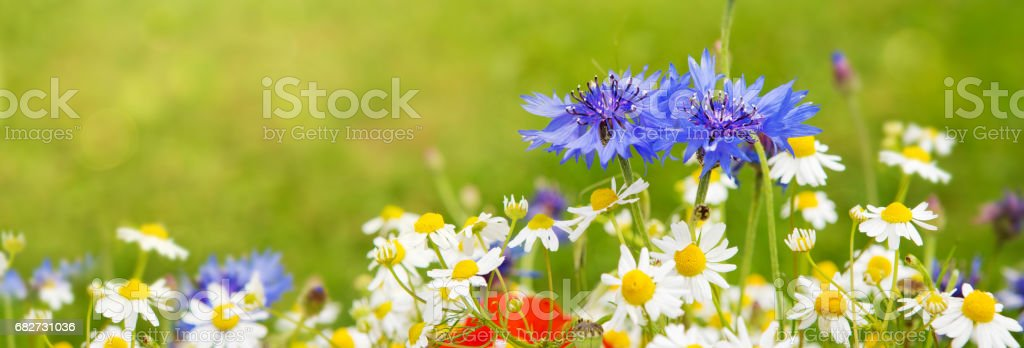 Wild flower bouquet stock photo