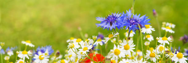Wild flower bouquet stock photo