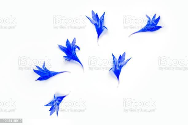 Wild flower cornflower picture id1045419912?b=1&k=6&m=1045419912&s=612x612&h=noethke4z5od9tdextdsjy  bejv1dvq updgg484gu=