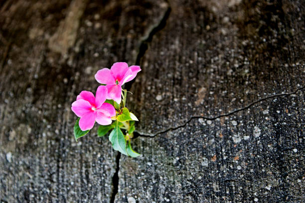 wild flower growing out of concrete cracked - endurance stock photos and pictures