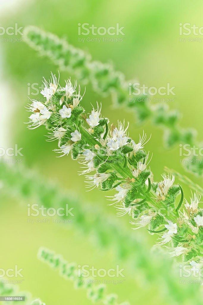 Wild flower in a meadow (unusual flowers) royalty-free stock photo