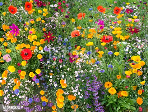 wild flower mix an atraction to many bees