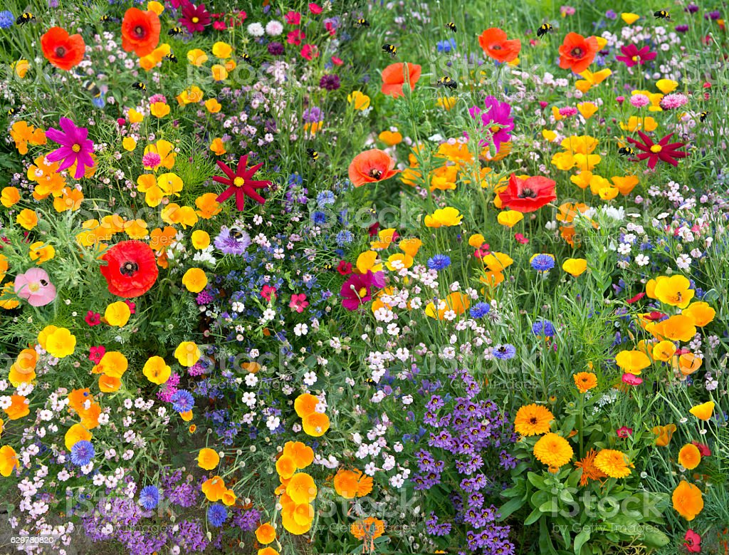 wild flower mix with poppies and lots of bees - foto de acervo