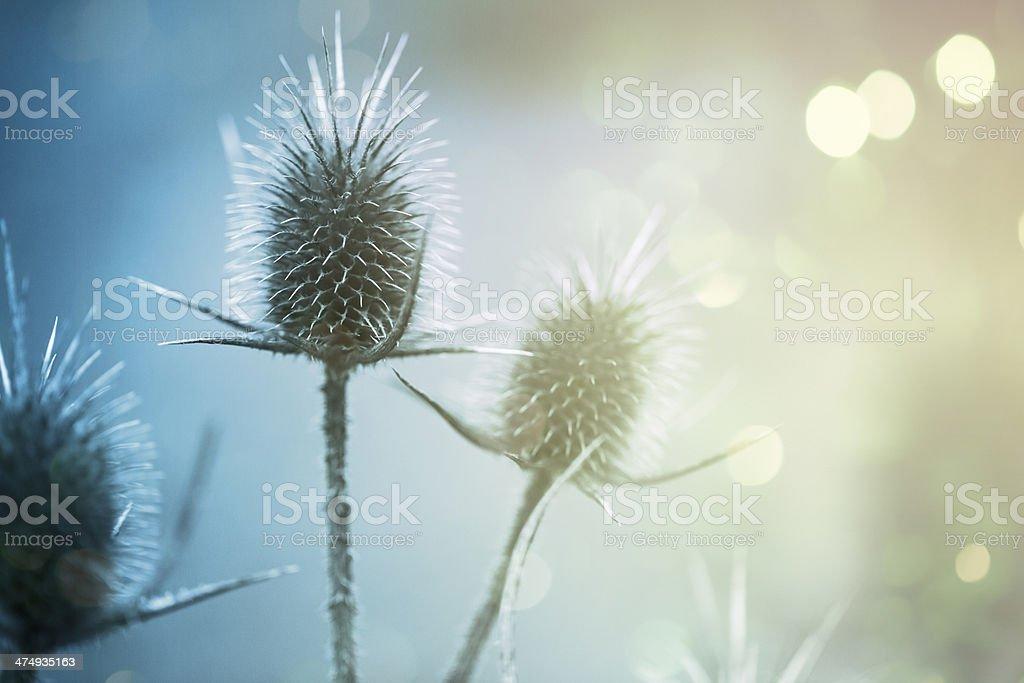 Wild flower on gliitreing background stock photo