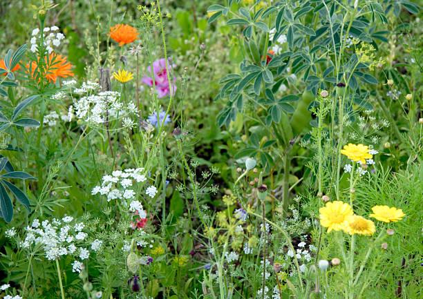 Wild Blumen-patch – Foto
