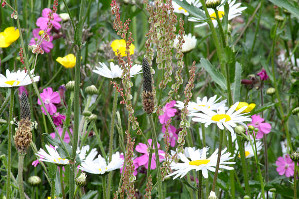 wild flower patch wild flowers abjure stock pictures, royalty-free photos & images