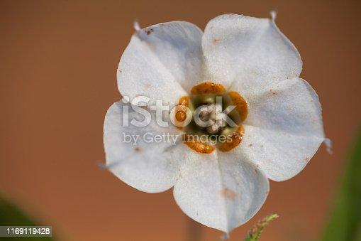 997750962 istock photo wild flower 1169119428