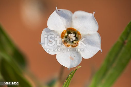 997750962 istock photo wild flower 1169119520