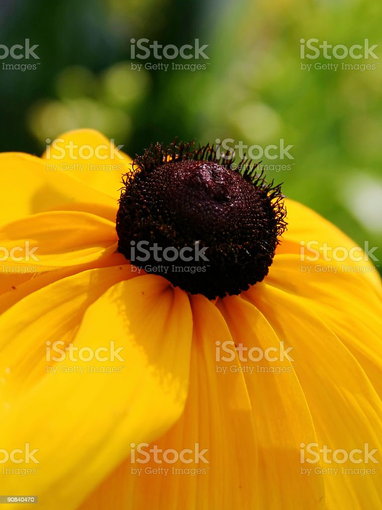 Wild Flower royalty-free stock photo