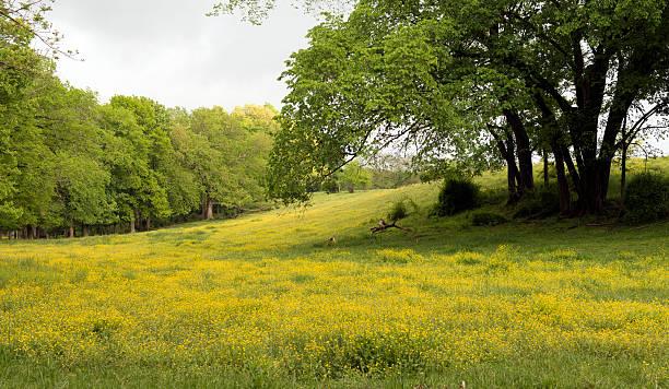 Wild flowers across the meadow stock photo