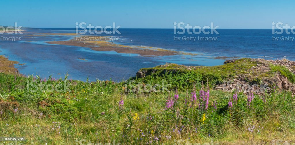 Wild flowers adn grasses on the shore of the White Sea stock photo