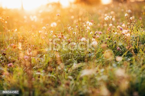 Wild flowers against sun in autumn