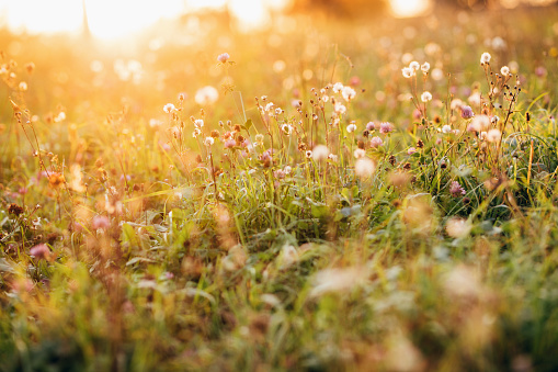 Wild flowers against sun in autumn