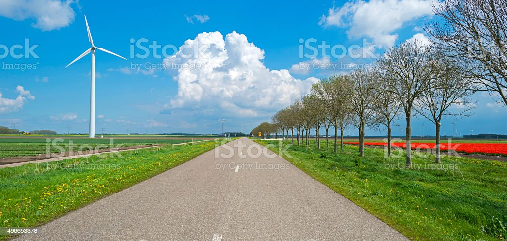 Wild flowers along a country road in spring stock photo