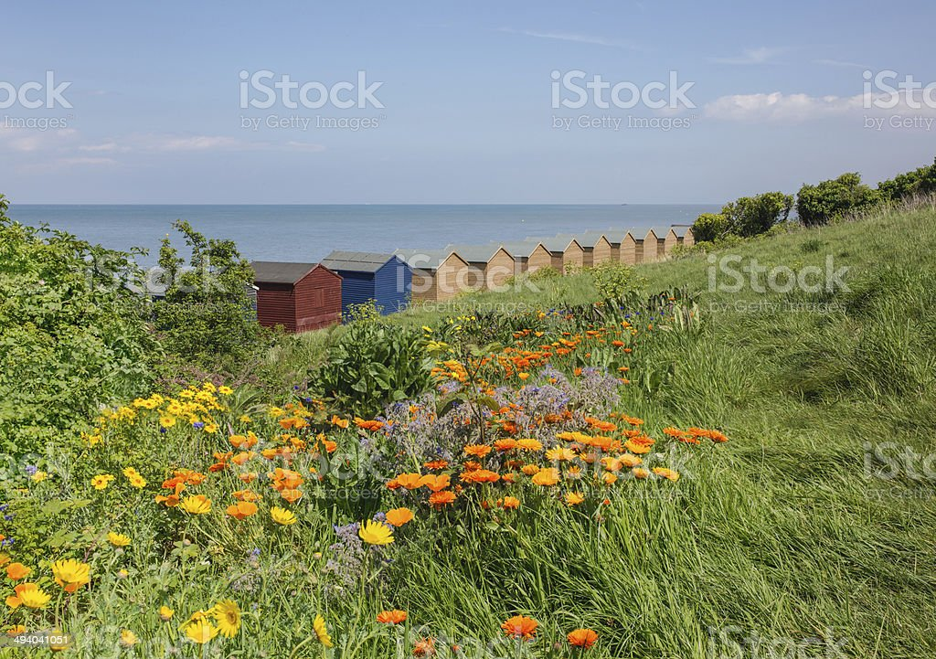 Wild flowers and beach huts in Whitstable stock photo