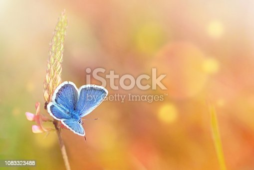 Wild flowers and blue butterfly in a meadow in nature in the rays of sunlight in summer. Close-up. A picturesque colorful artistic image with a soft focus.