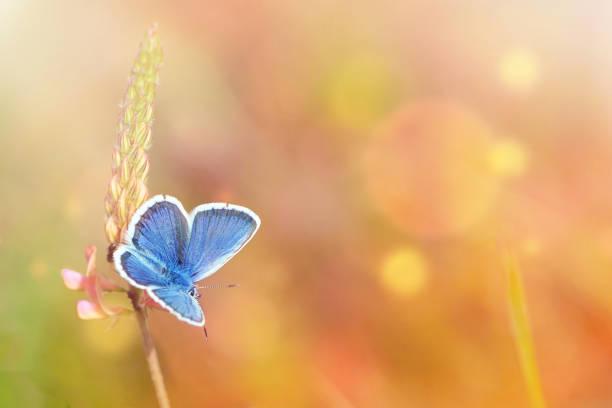Wild flowers and blue butterfly in a meadow in nature in the rays of picture id1083323488?b=1&k=6&m=1083323488&s=612x612&w=0&h=280faky4b hoiwzczdn1nsf qlvfs2pbmizgfn9zefu=