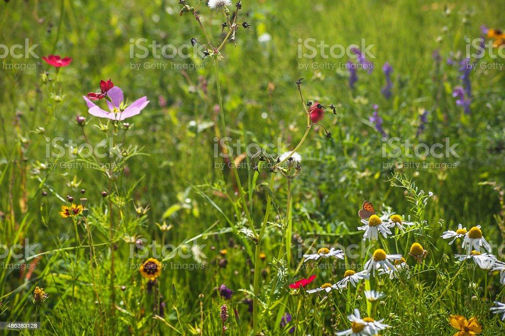 Wild flores y mariposa. - foto de stock