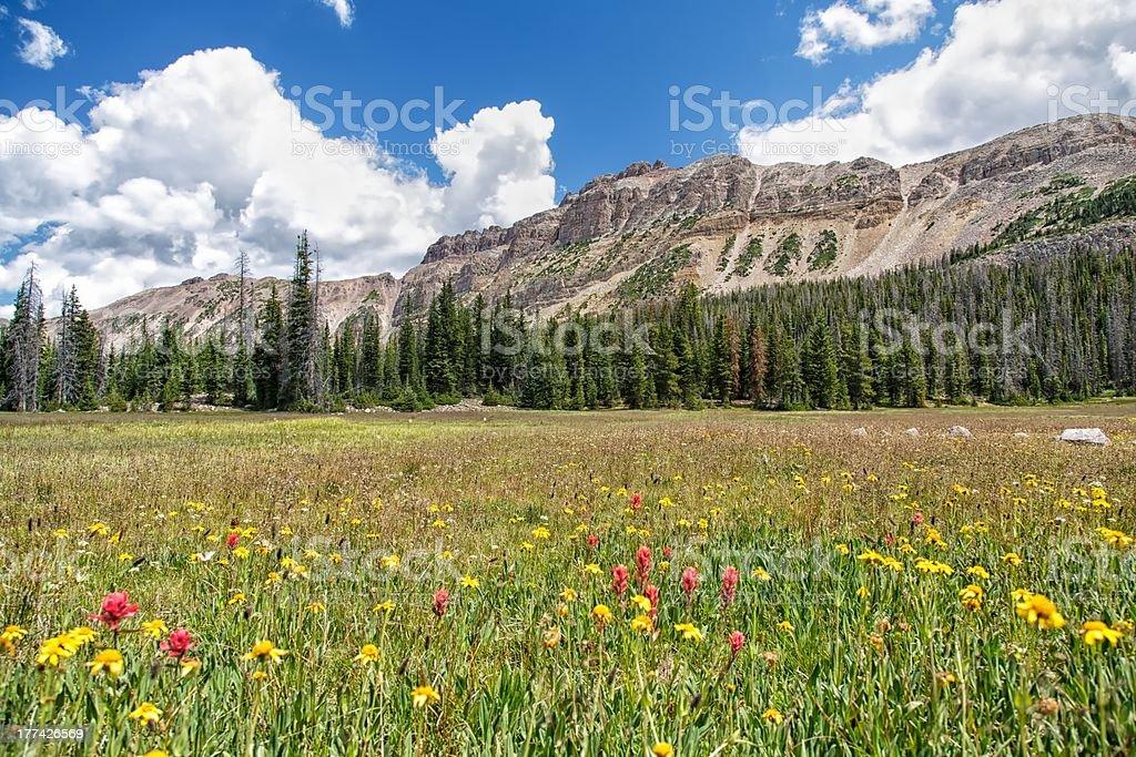 Wild Flowers and Hayden Peak stock photo