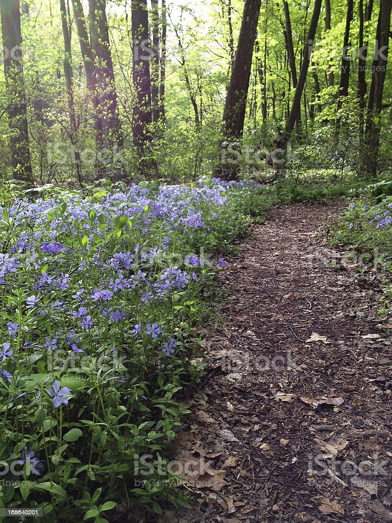 Wild Flowers and Path in the Woods royalty-free stock photo