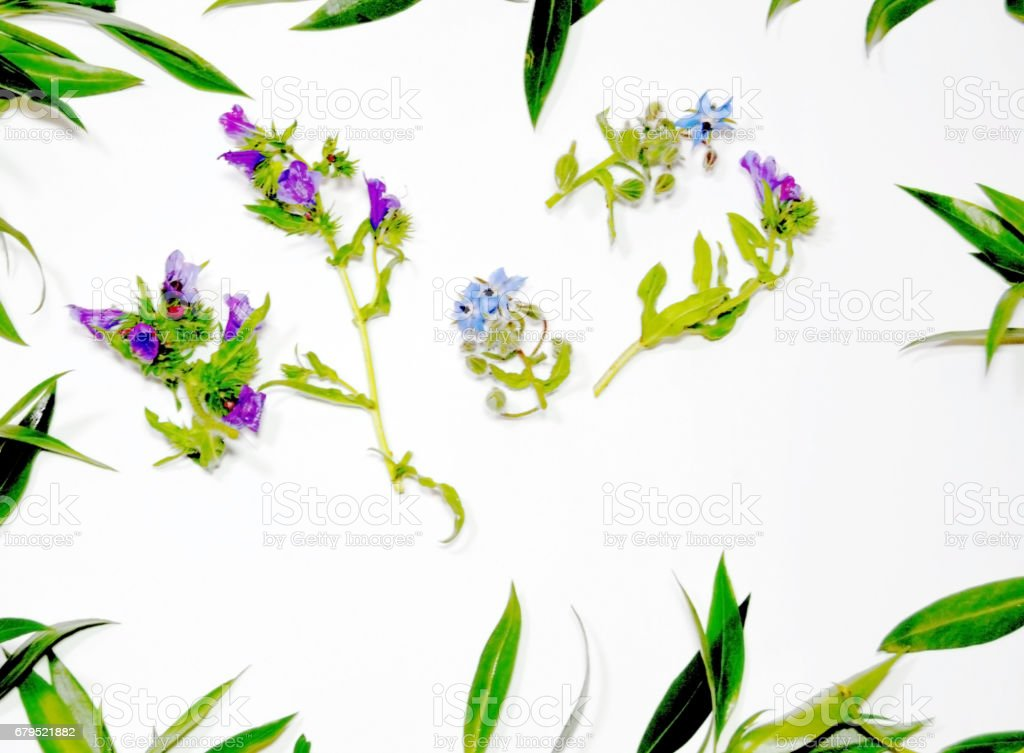 Wild flowers and wild leaves on white background royalty-free stock photo
