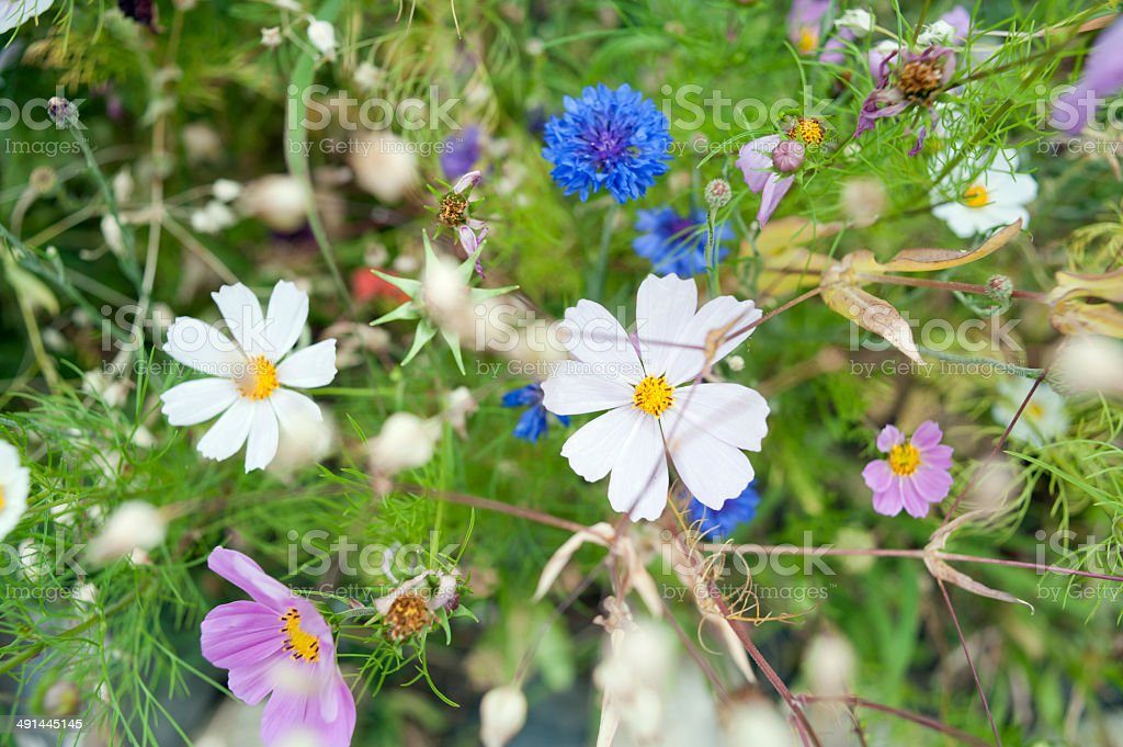 Wild flowers blooming stock photo