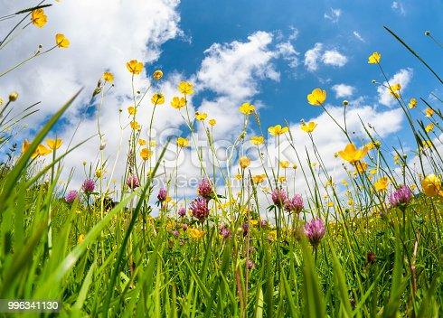 Wild Flowers In A Meadow On A Summers Day
