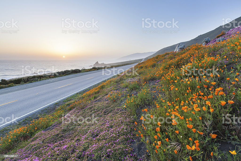 wild flowers in Big Sur, California royalty-free stock photo