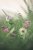 Green toned image of wild flowers.