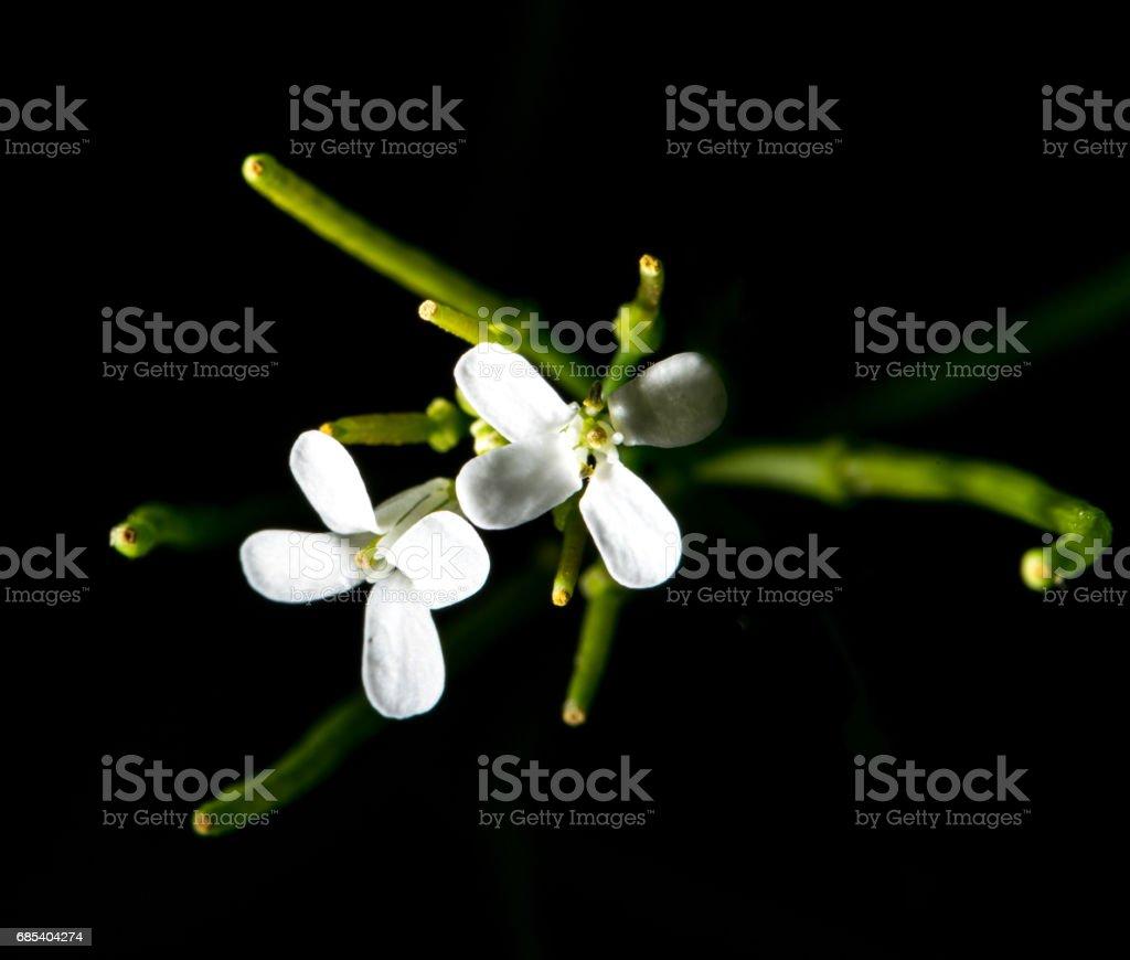 Wild Flowers in Long Island in Spring foto de stock royalty-free