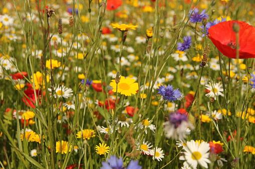Wild flowers in meadow