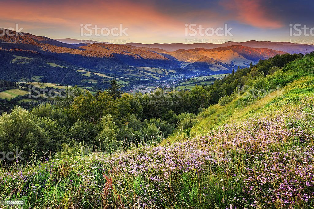 wild flowers in mountains - Royalty-free Color Image Stock Photo