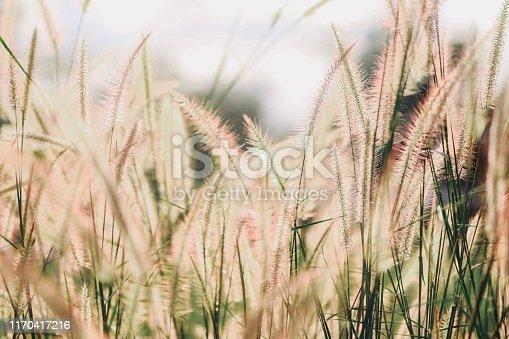 Wild flowers in nature, blurry scene