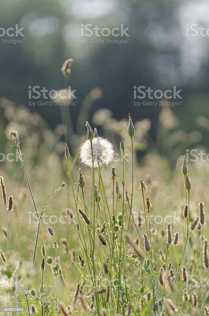Wild flowers in summertime stock photo