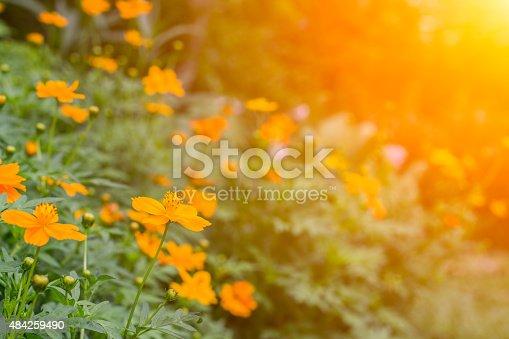 519188550 istock photo wild flowers in sunrise 484259490
