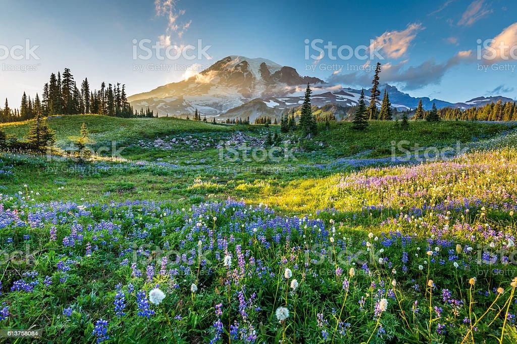 Wild flowers in the grass on a background of mountains. - Zbiór zdjęć royalty-free (Drzewo)