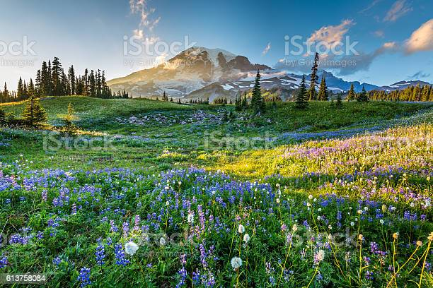 Photo of Wild flowers in the grass on a background of mountains.