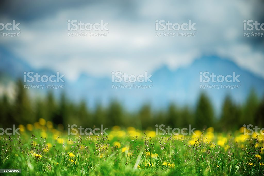 Wild Flowers Meadow with Defocused Mountains in the Background royalty-free stock photo
