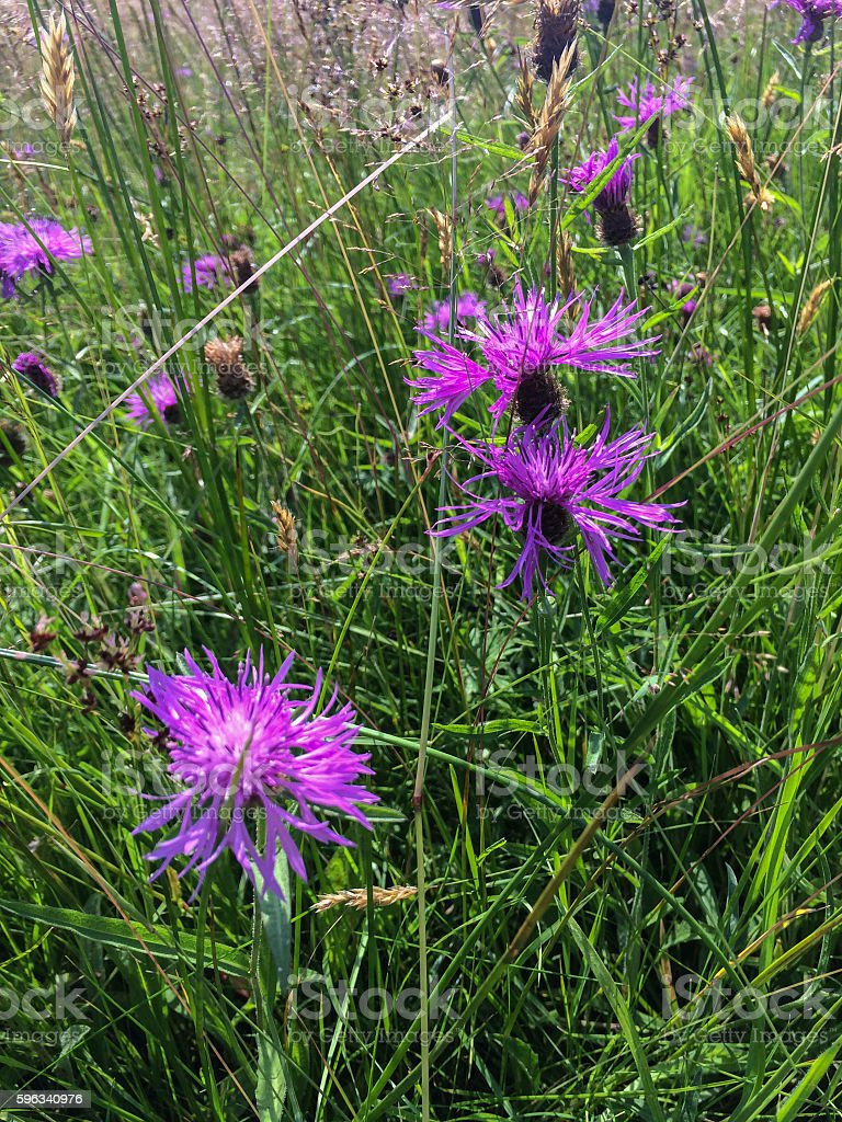 Wild flowers near canal royalty-free stock photo