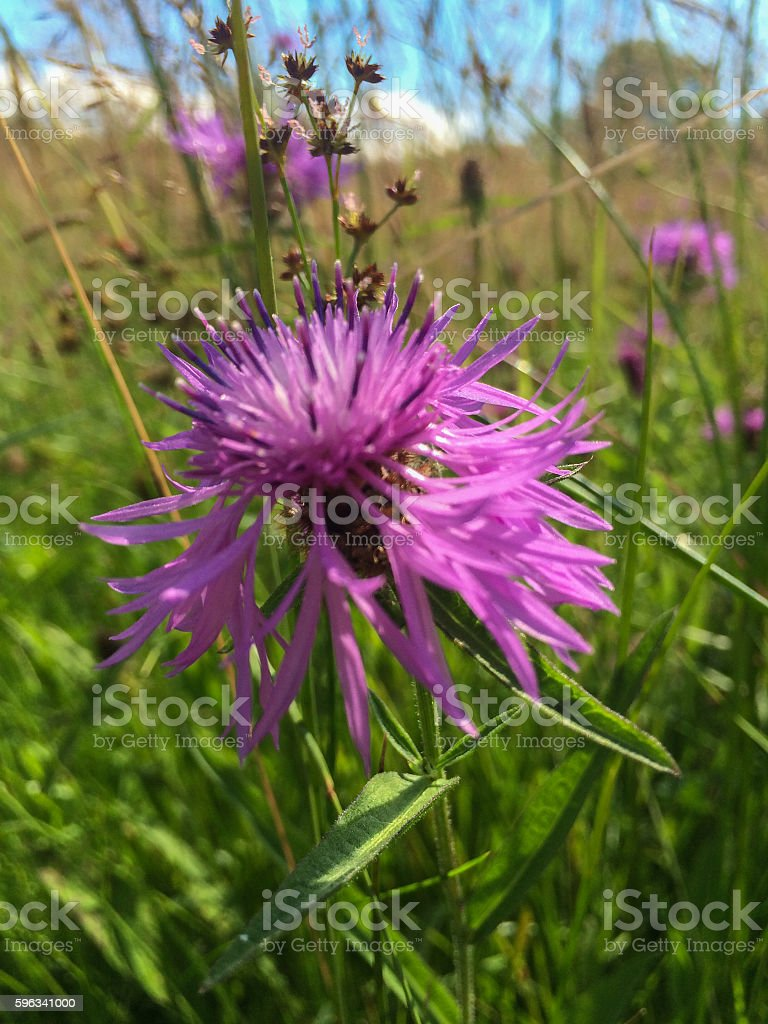 Wild flowers near canal royalty-free stock photo