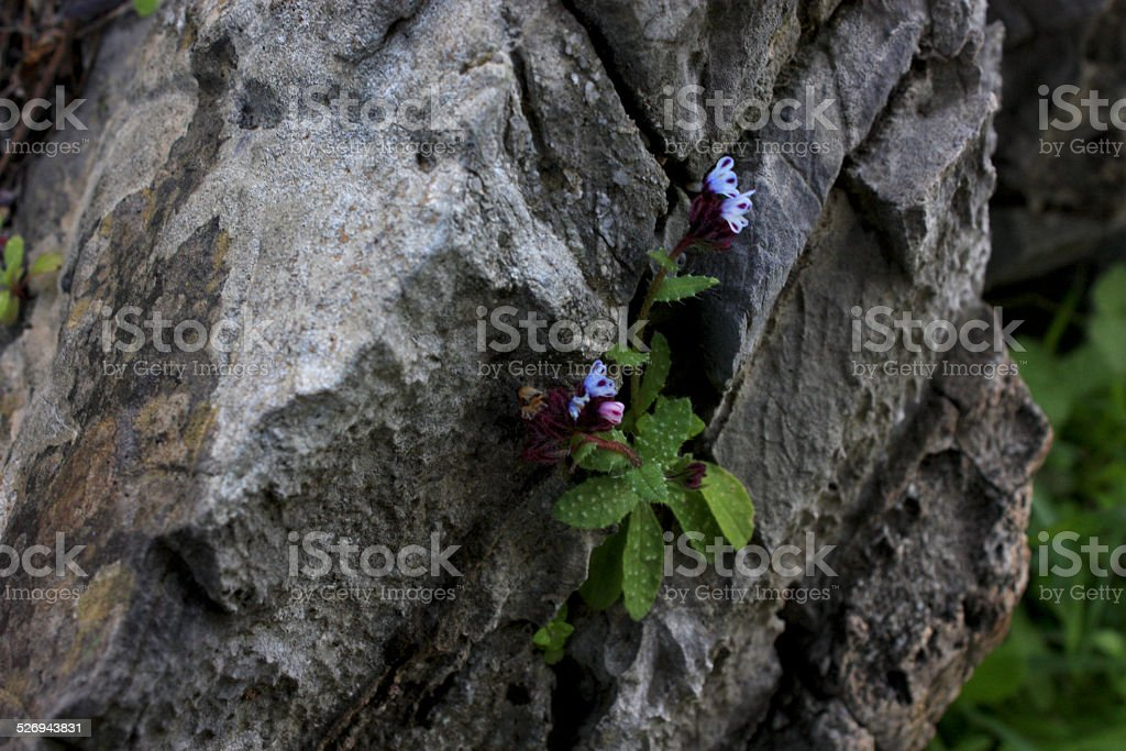 Wild flowers on a stone stock photo