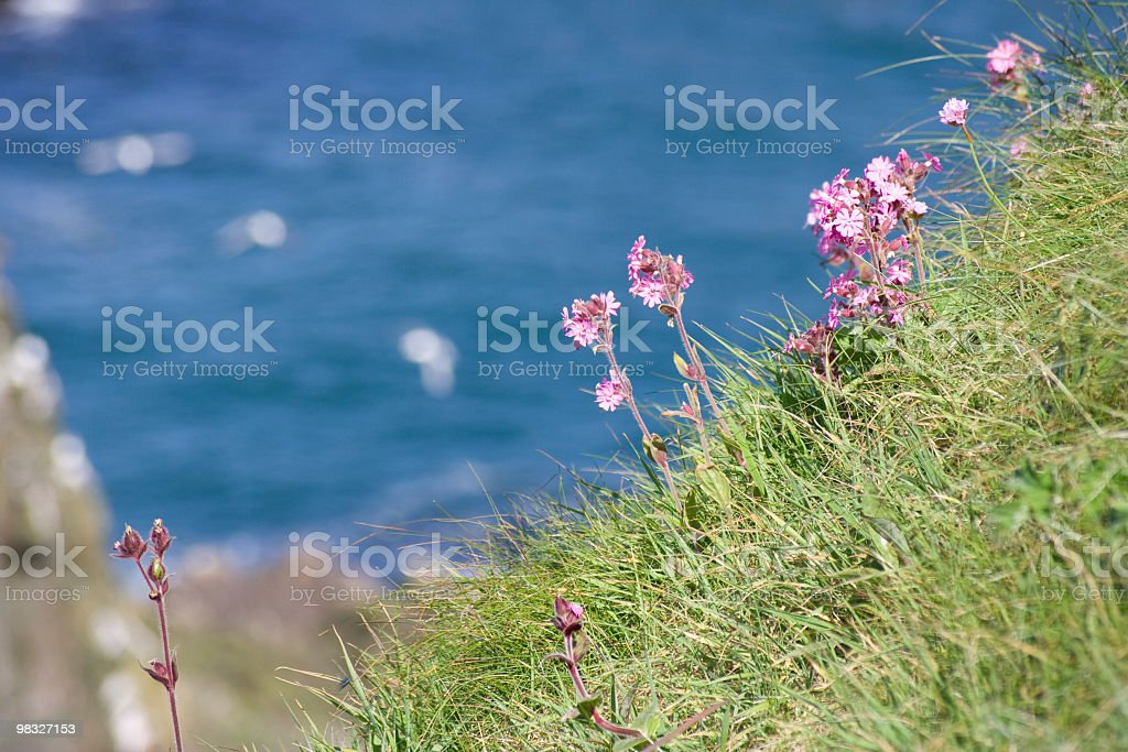 Wild flowers on clifftop royalty-free stock photo