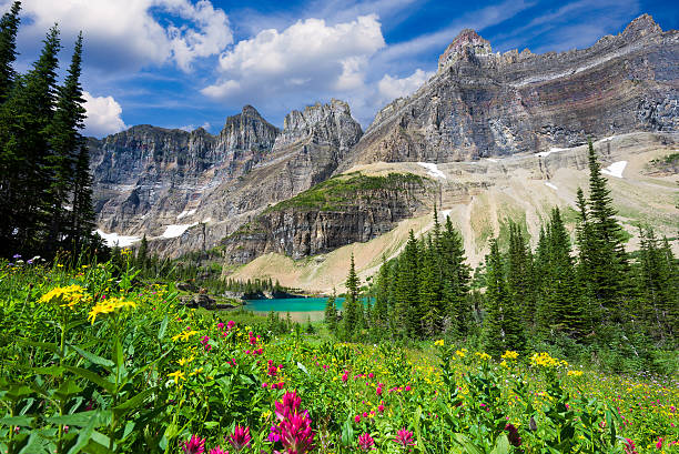 wild flowers on the iceberg lake trail - us glacier national park stock pictures, royalty-free photos & images