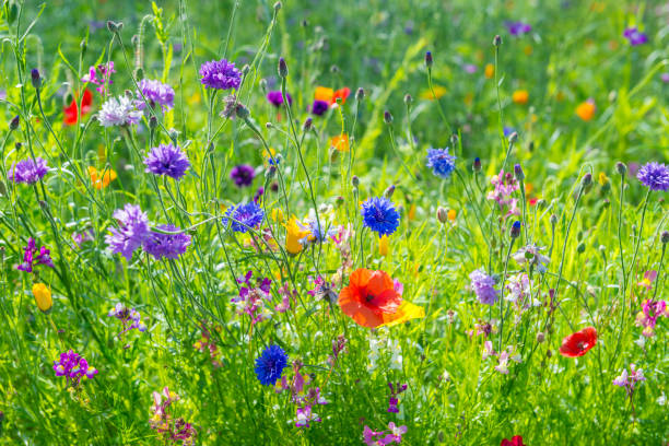 Wild flowers on the meadow stock photo